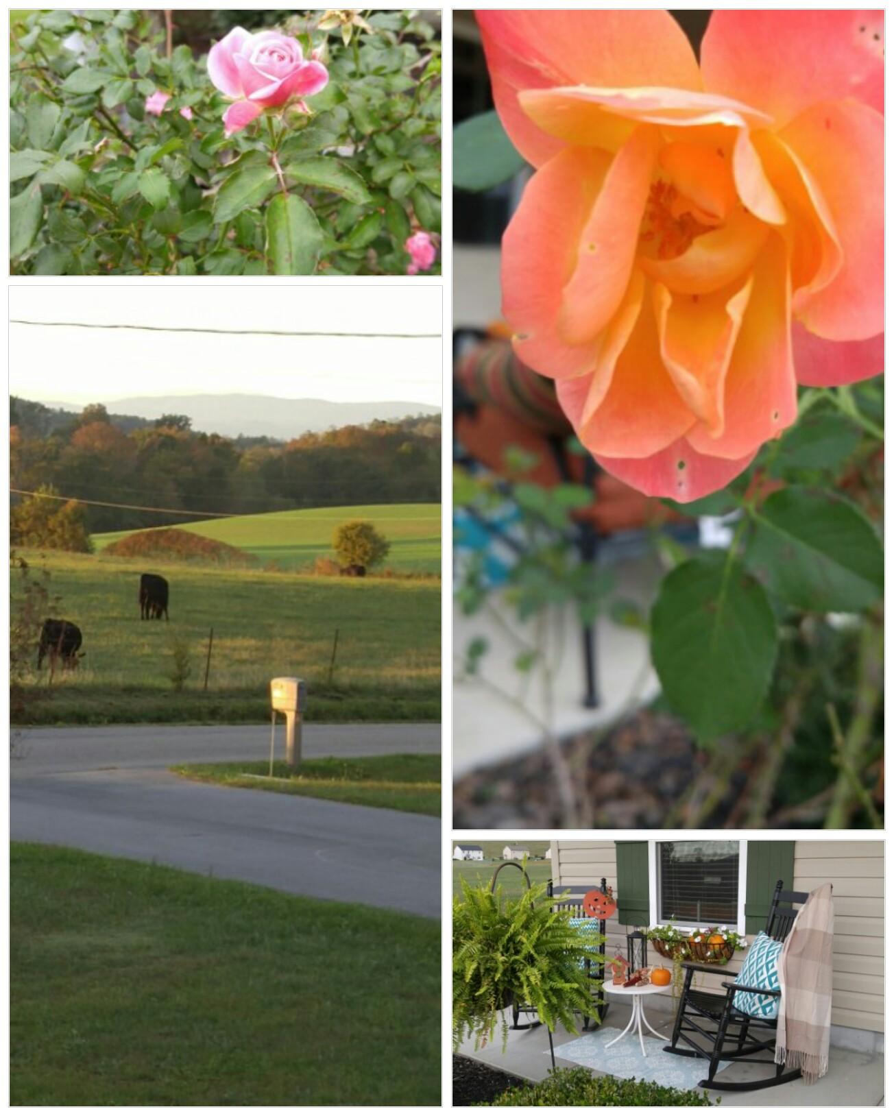 161013_152054_collage-1.jpg